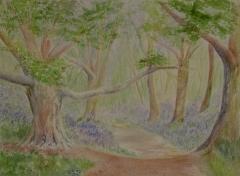 bluebell-woods