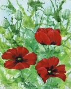 garden-poppies